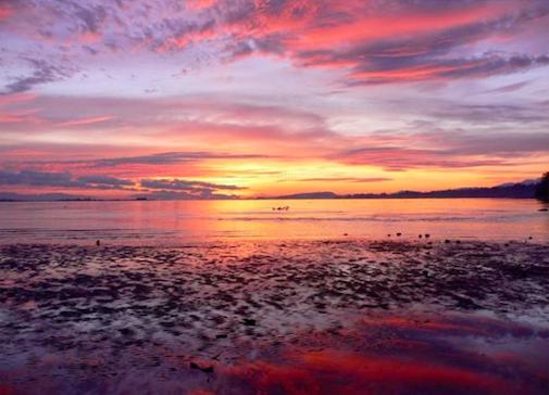 A cor Pantone 2019 é a Living Coral, Pantone, Cor Pantone do ano 2019, Living Coral, como combinar o living coral, tendencia de comportamento, tendencias, curso de tendencias, workshop de tendencias, Crivorot Scigliano